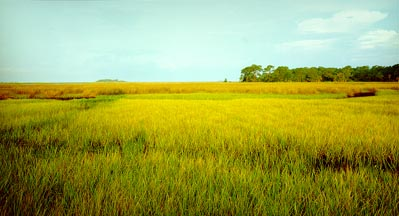 Cedar Key Salt Marsh